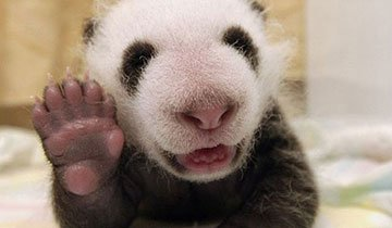 Los 12 animales más educados que has visto jamás