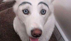 Perros con cejas