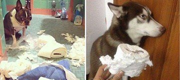 22 Perros que oficialmente han sido declarados culpables