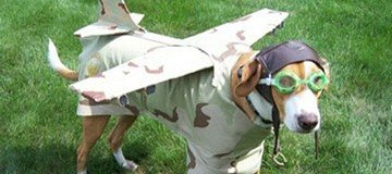 22 Perros extrañamente disfrazados. No podrás parar de reír ¡Asegurado!