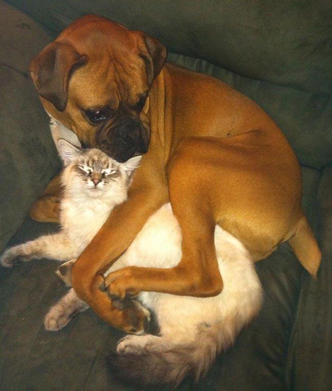 perros-espacio-personal15