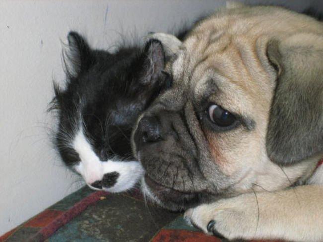 perros-espacio-personal21