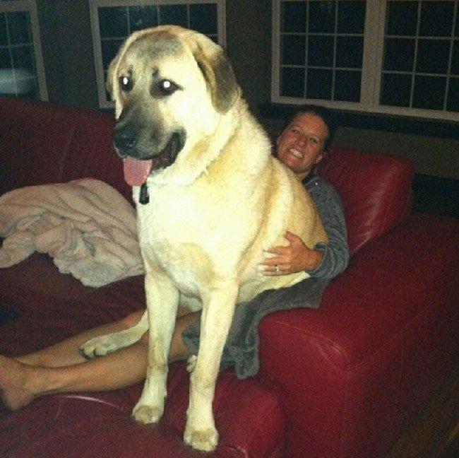 perros-espacio-personal24