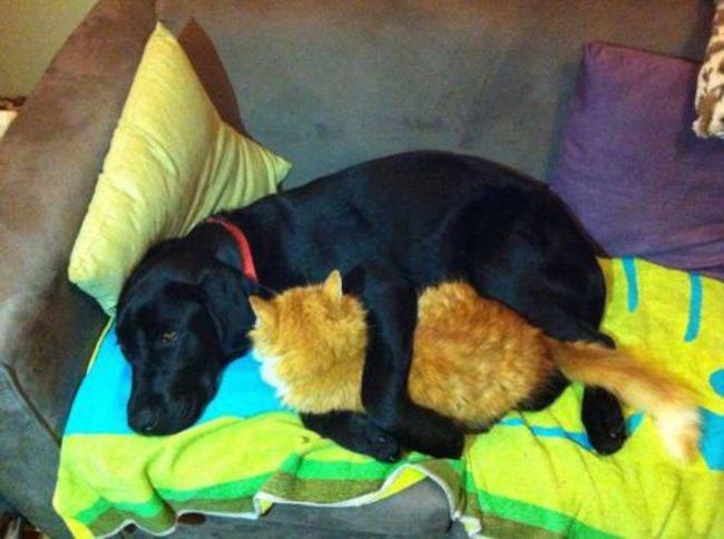 perros-espacio-personal26