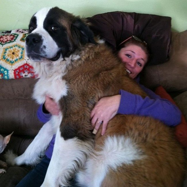 perros-espacio-personal6
