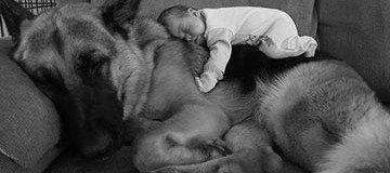 22 Niños pequeños junto a sus grandes perros