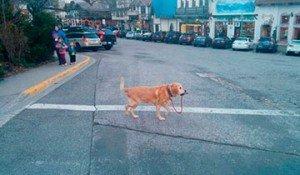 perros independientes