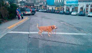 20 Perros valientes e independientes que no necesitan a un humano para nada