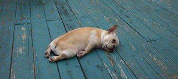 15 Perros que han decidido descansar justo aquí, así y ahora