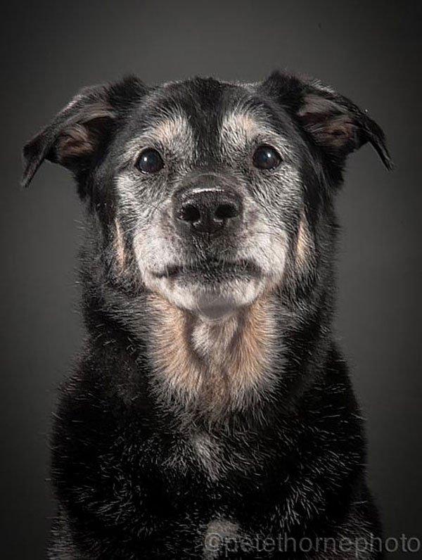 perros-old-faithful12