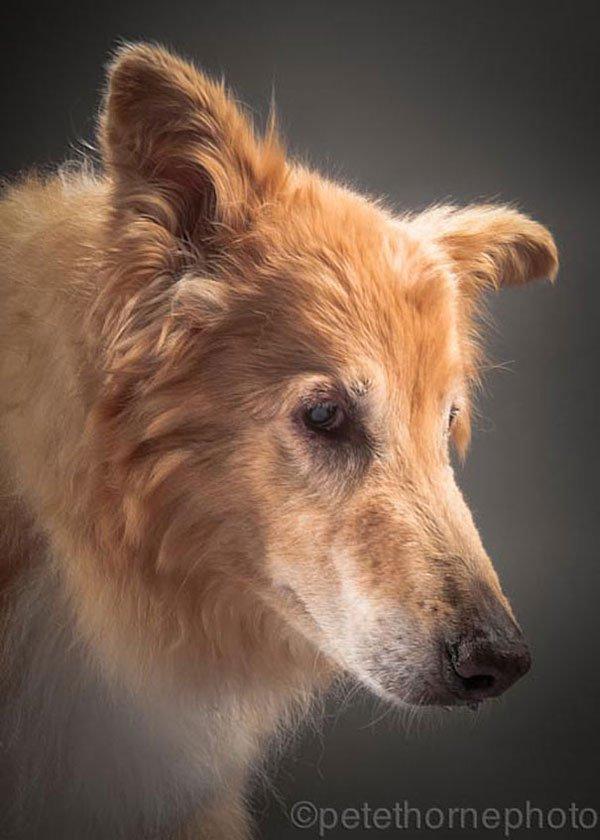 perros-old-faithful3