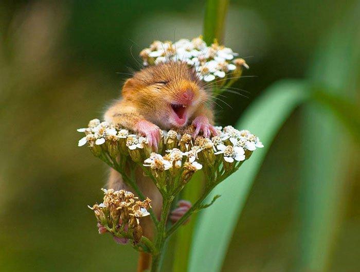 ratones-salvajes1