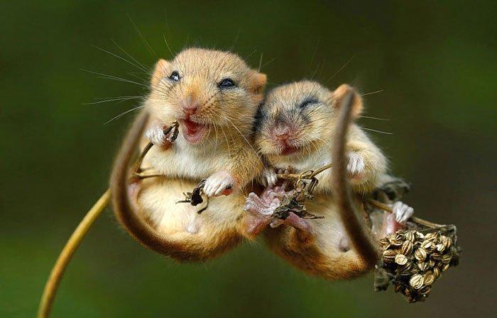 ratones-salvajes7