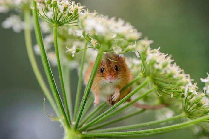 ratones-salvajes8