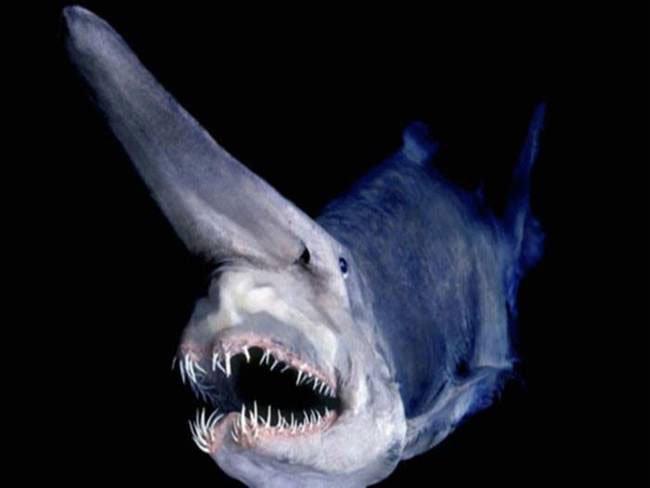 animal-ancestral-aterrador5