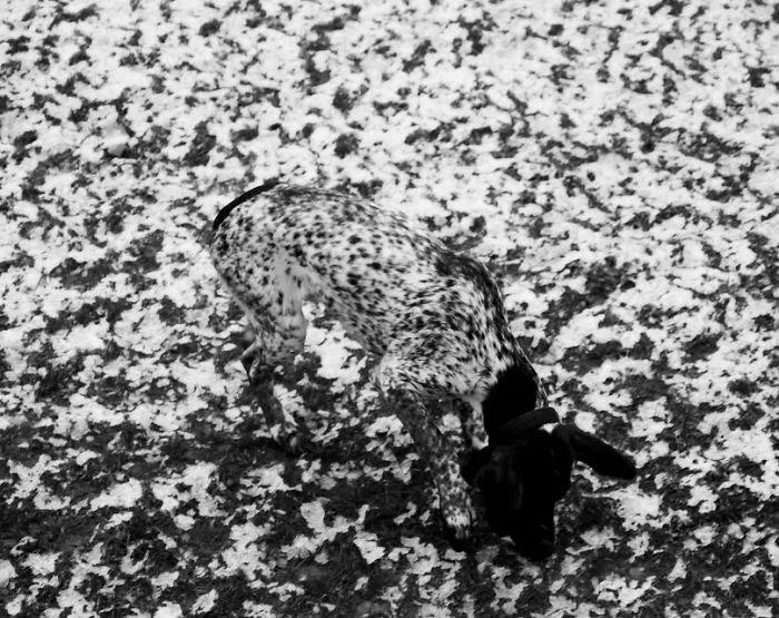animal-camuflado11
