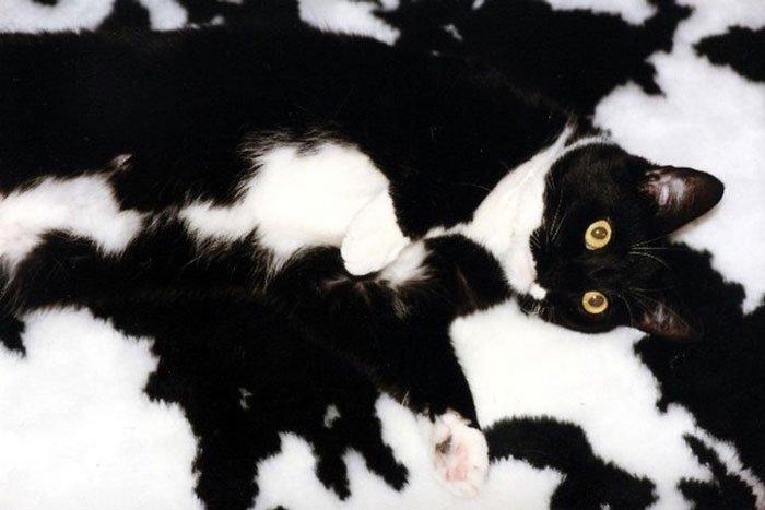 animal-camuflado6