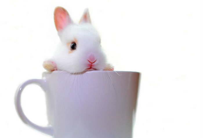 animal-dentro-taza10