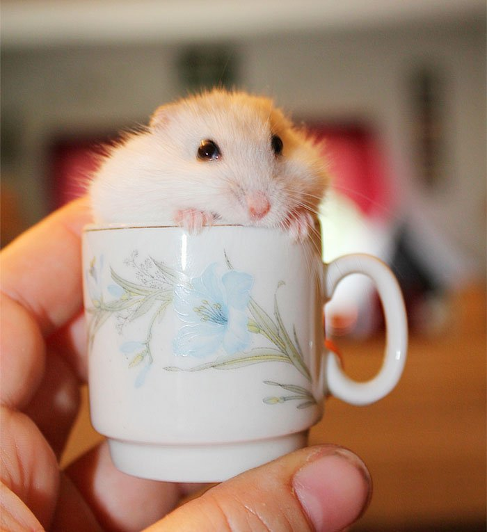 animal-dentro-taza13
