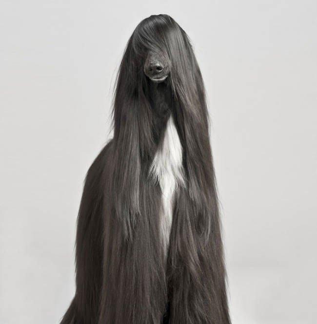 animal-peludo2