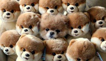 15 Animales que sin querer practicaron el arte del camuflaje. ¿Los ves?