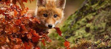 15 Animales que ya están disfrutando de la magia del otoño. Hermoso.