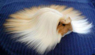 Animales con pelo
