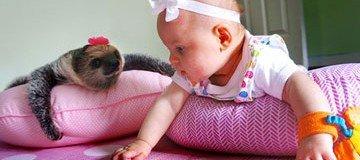 Desde que nació, este bebé y su perezoso son amigos inseparables. Adorable.