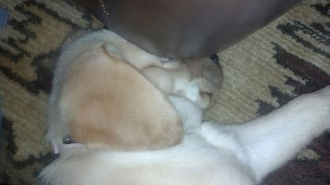 cachorro-duerme-raro13