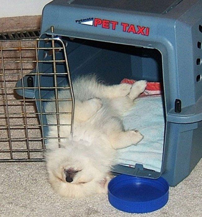 cachorro-duerme-raro2