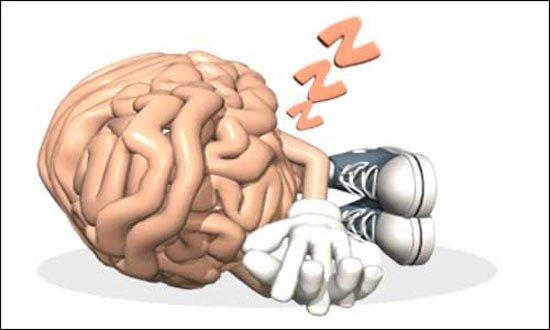 cerebro-vida-interesante6