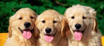 A muchas personas le gustan los perros, pero no todas conocen estos datos sobre ellos.