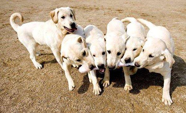 datos-perros6