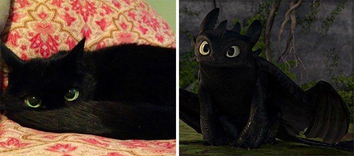 gato-parecido1