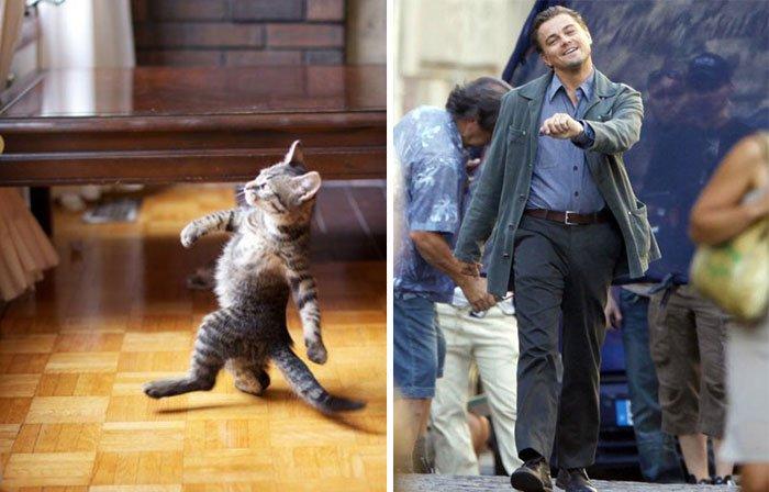 gato-parecido12