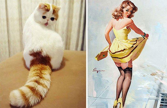 gato-parecido14