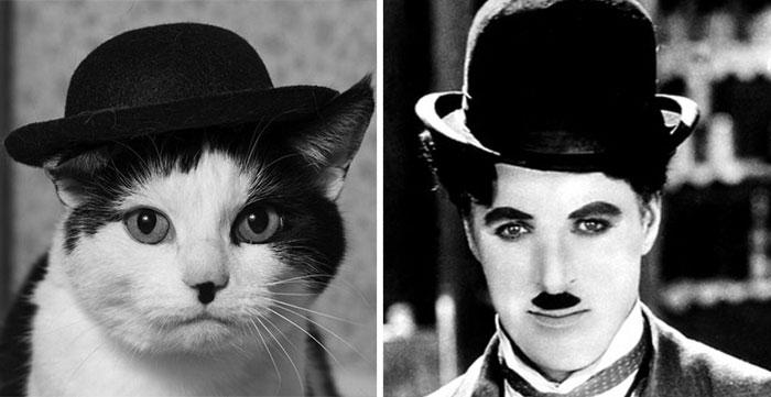 gato-parecido15