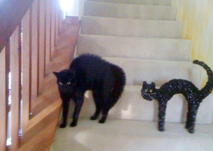 gato-parecido16
