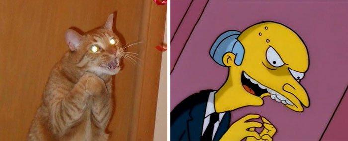 gato-parecido17