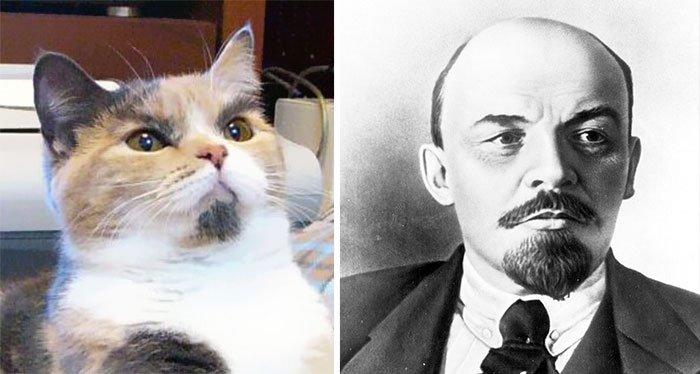 gato-parecido19