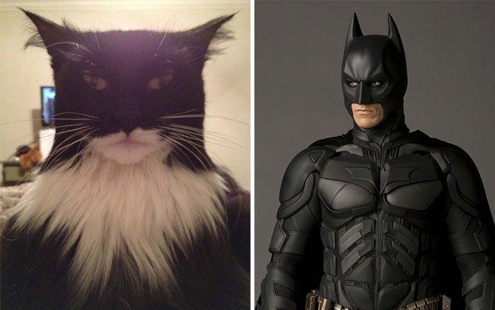 gato-parecido2