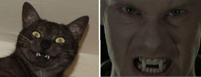 gato-parecido22
