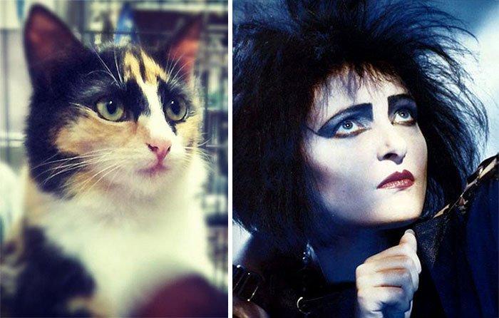 gato-parecido23