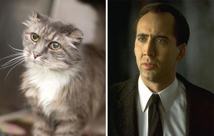 gato-parecido24