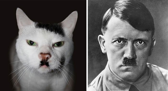 gato-parecido3