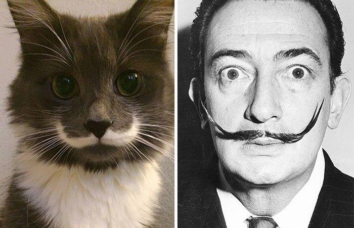 gato-parecido4