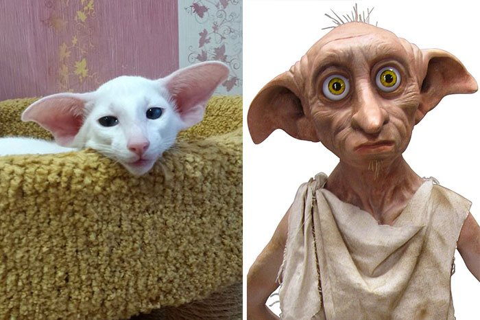 gato-parecido6