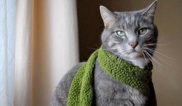 25 Gatos cuyos armarios roperos y sentido de la moda te producirán envidia.