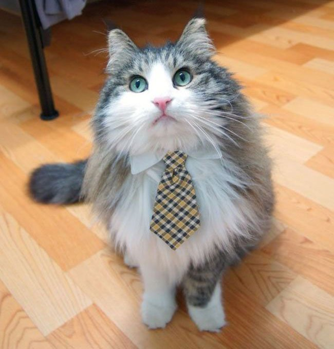gato-ropa-moda1