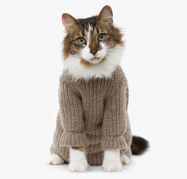 gato-ropa-moda10